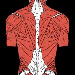 Mal de dos : 6 astuces à utiliser au quotidien