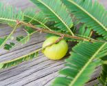 plantes anti-chute - amla