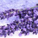 La lavande, une plante médicinale aux propriétés apaisantes