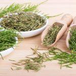Prêle, plante cicatrisante et coagulante