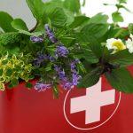 10 plantes médicinales de premiers soins