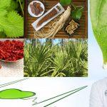 Plantes pour la santé masculine