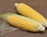 stigmates de maïs