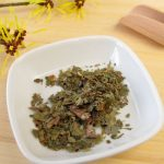 Hamamélis, plante médicinale astringente et anti-inflammatoire