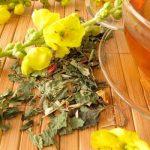 Verbasco, plante médicinale pour les problèmes respiratoires
