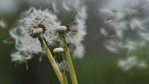 Comment se manifeste une allergie respiratoire ?